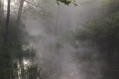 Fog and Stream