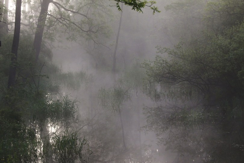 Fog and Stream